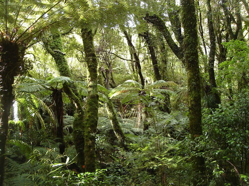 Rain Forest in New Zealand (in Mt Bruce National Wildlife Centre)